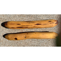 Handmade Mulga Aboriginal Plain/Raw Music Sticks